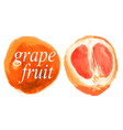grapefruit whole and half in a cut drawn vector image vector image