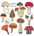 hand drawn mushrooms collection in color edible vector image
