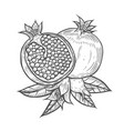 pomegranate fruit berry with flower and leafs vector image vector image