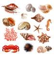 seashell realistic set vector image vector image
