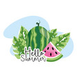 tropical watermelon with nature leaves in summer vector image vector image