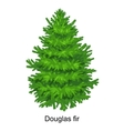 Christmas tree like douglas fir for New vector image vector image