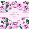 roses flower invitation card delicate vector image vector image