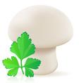 mushroom champignon vector image vector image