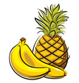 pineapple and bananas vector image