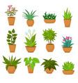 indoor and outdoor landscape garden potted plants vector image