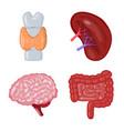 anatomy and organ logo