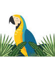 exotic and tropical bird vector image vector image