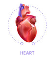 heart isolated icon cardiovescular system internal vector image vector image