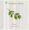 laurel essential oil label aromatic plant vector image vector image