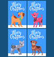 merry christmas postcards with pedigree dogs set vector image vector image