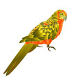 parrot tropical exotic bird vector image vector image