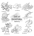 Set of forest berries vector image vector image
