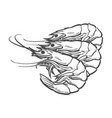 sketch cartoon sea lobster isolated vector image vector image