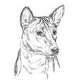 basenji hand drawing portrait vector image vector image