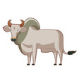 cartoon standing zebu vector image