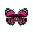 riodinidae butterfly metalmark vector image