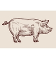 Sketch pig Hand drawn vector image vector image