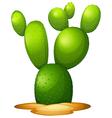 Opuntia microdasy vector image vector image
