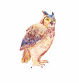 watercolor brown owl or owl of a seated bird vector image vector image