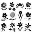 Flower set Nasturtium primula lily viola anemone vector image vector image