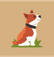 cartoon welsh corgi dog sitting on green grass vector image vector image