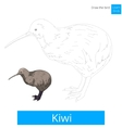 Kiwi bird learn to draw vector image vector image