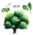 Oak Tree watercolor vector image vector image
