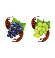 red and white table grapes in chocolate splash vector image vector image
