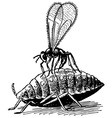aphid vector image
