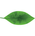 Green leaf with world map vector image vector image