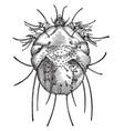 head louse vintage vector image