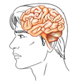 The human brain vector image vector image
