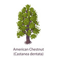 american chestnut icon flat style vector image vector image