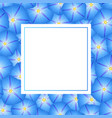 blue morning glory flower banner card vector image vector image