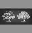 chalk sketch of two oaks vector image