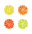 citrus slices set orange lime lemon grapefruit vector image vector image