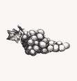 grapes ink line draw vector image