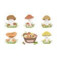 collection wild edible forest mushrooms set vector image