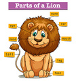 Diagram showing parts of lion vector image vector image
