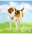 dog beagle fun pet puppy vector image vector image