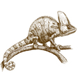 engraving chameleon vector image