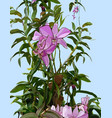painted orchid plant with pink flowers in green vector image
