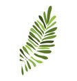 tropical leaf icon cartoon style vector image vector image