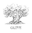 beautiful sketchy olive tree in sketchy style vector image