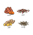 flat sketch spices condiments herbs set vector image vector image