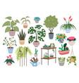 home plants houseplants set green botanical vector image vector image