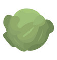 green leaf cabbage icon isometric style vector image vector image