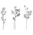 hand drawn of vintage flowers elements isolated vector image