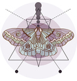 Hipster old fashion background with moth vector image vector image